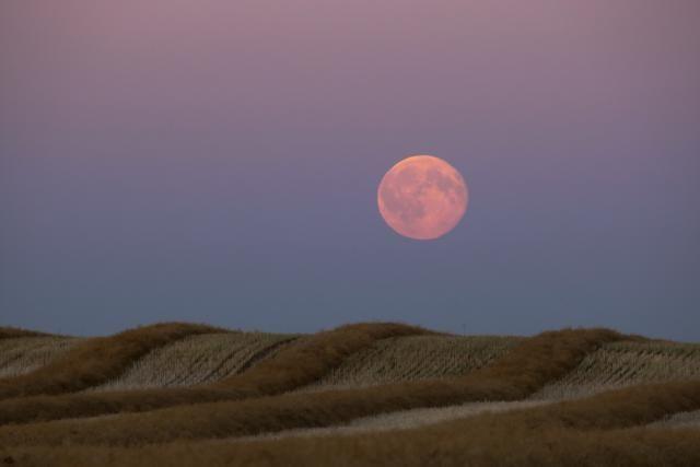 Harvest moon rising over a cut field in Alberta, Canada.