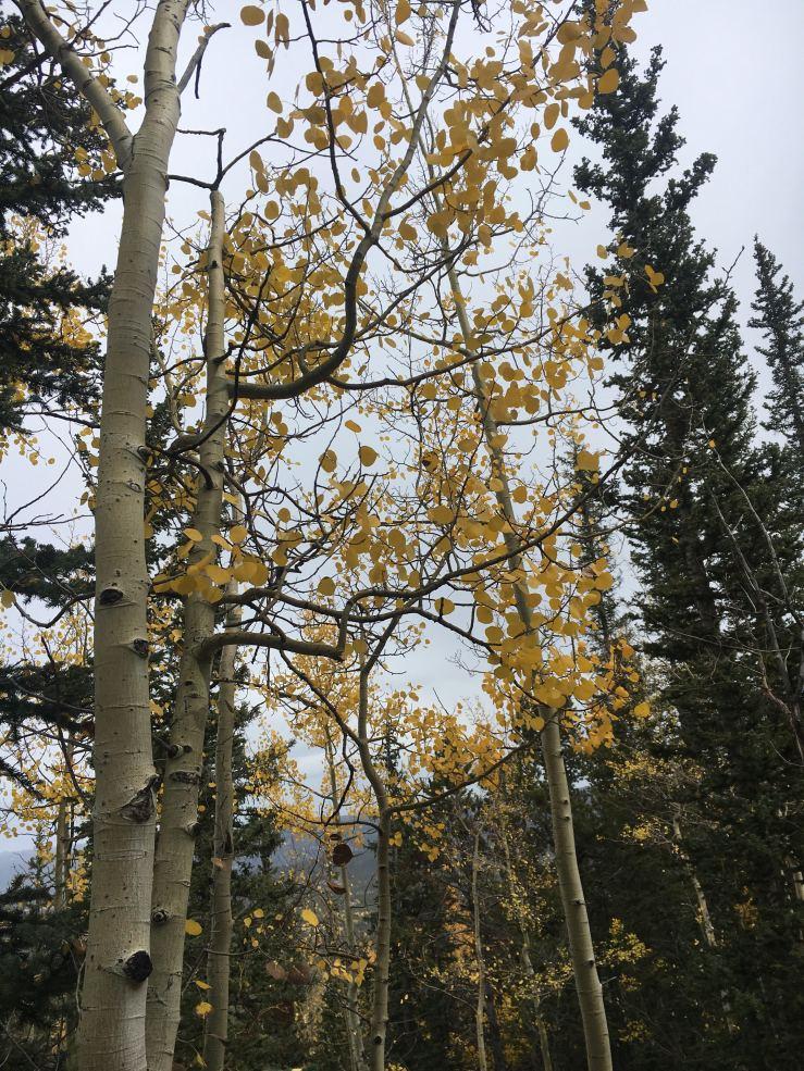 Colorado 7